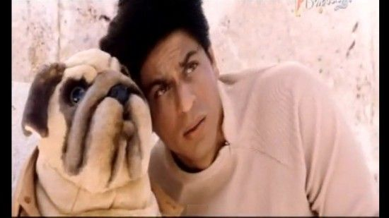Image result for shahrukh khan chalte chalte dog