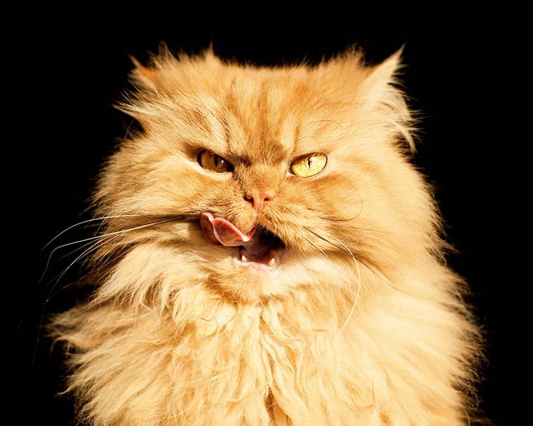 Garfi The New Angriest Cat In The World Angry Cat Cat Cat And Cat - Garfi is officially the worlds angriest cat