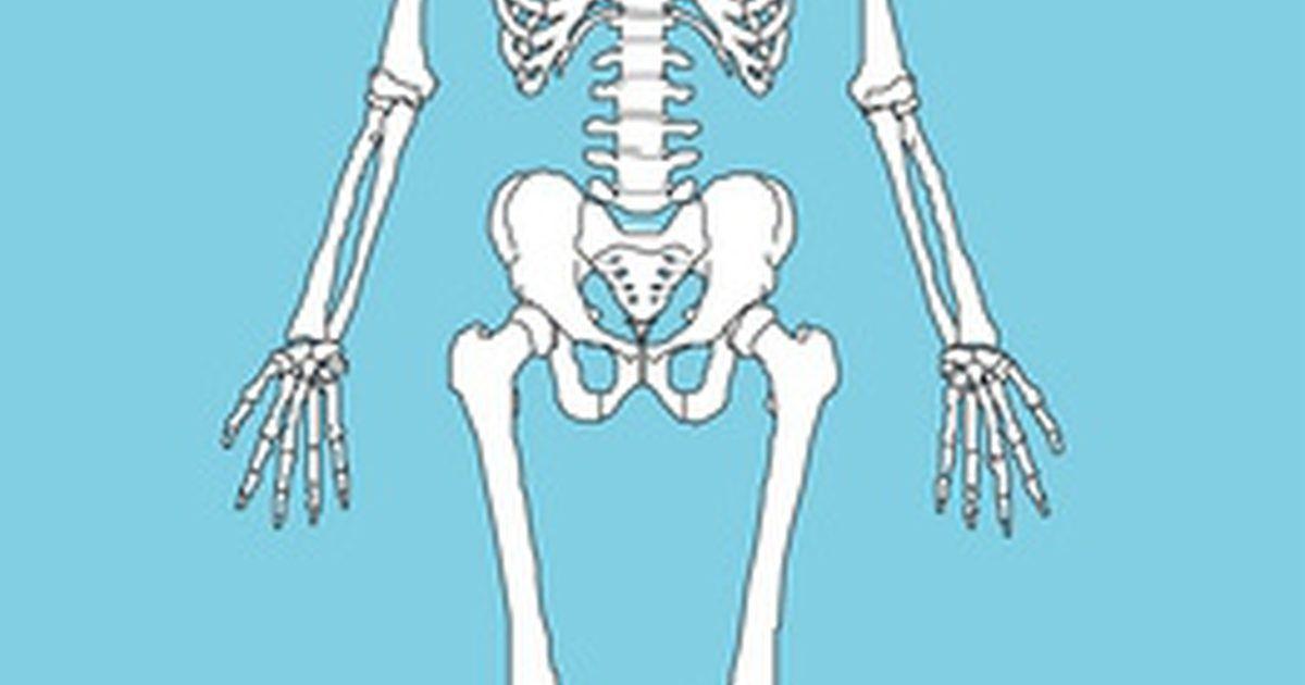 Cómo hacer un modelo de un esqueleto humano. El esqueleto humano ...