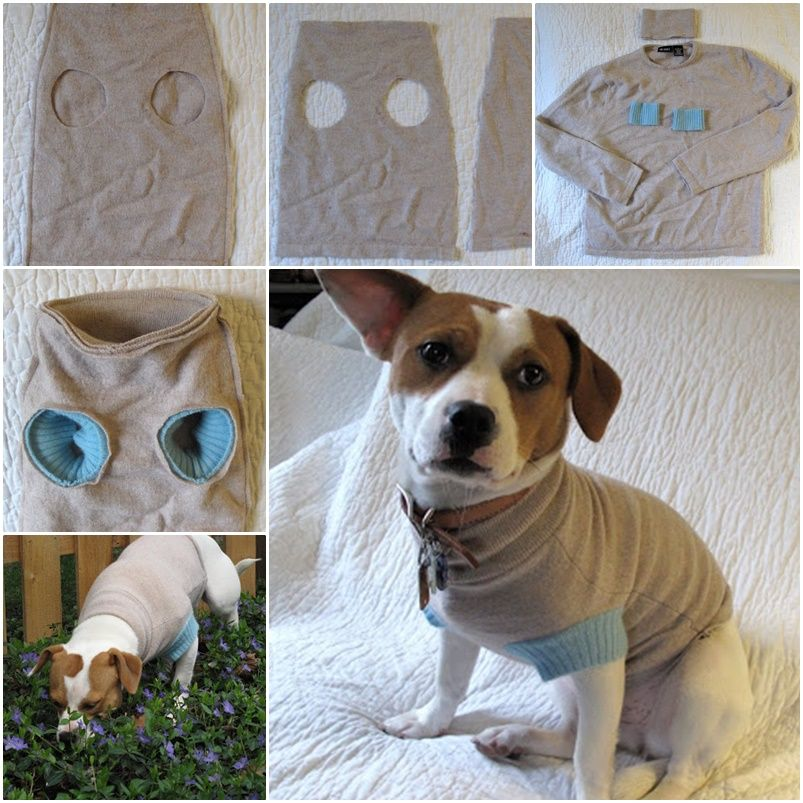 DIY Upcycle old Sweater into Cute Pet Clothes