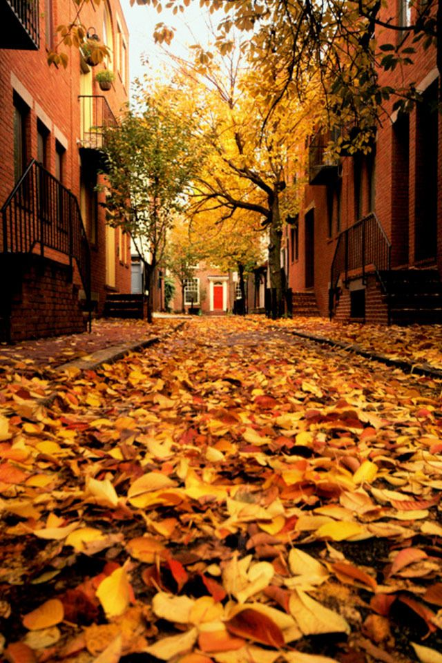 Autumn in Philadelphia, my favorite season :)
