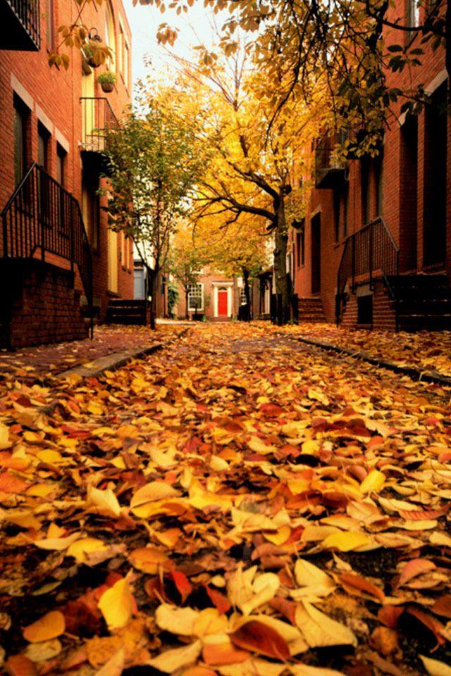 Autumn in Philadelphia, my favorite season :)