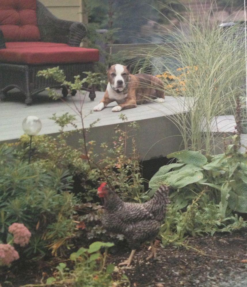 a911a708c36d9e639c2e0ccdc06fa36e - Free Range Chicken Gardens Jessi Bloom