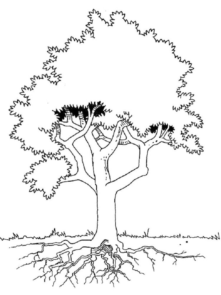 Tree Coloring Pages With Roots Tree Coloring Page Coloring