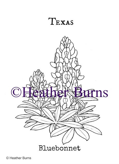 Texas State Flower Bluebonnet State Flower Coloring Book Blue