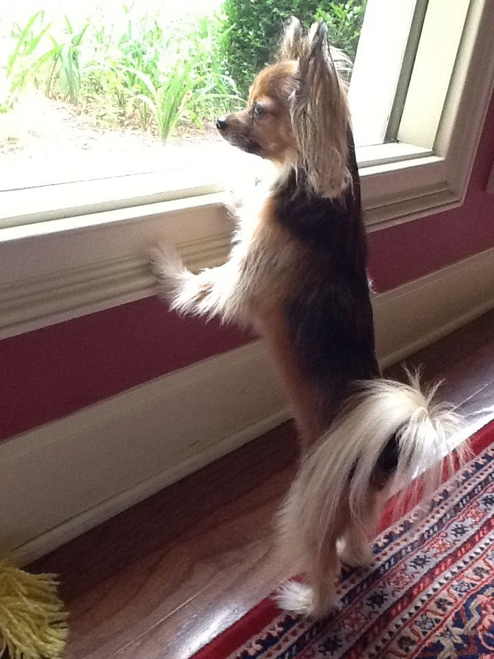 Lilly watching the squirrels