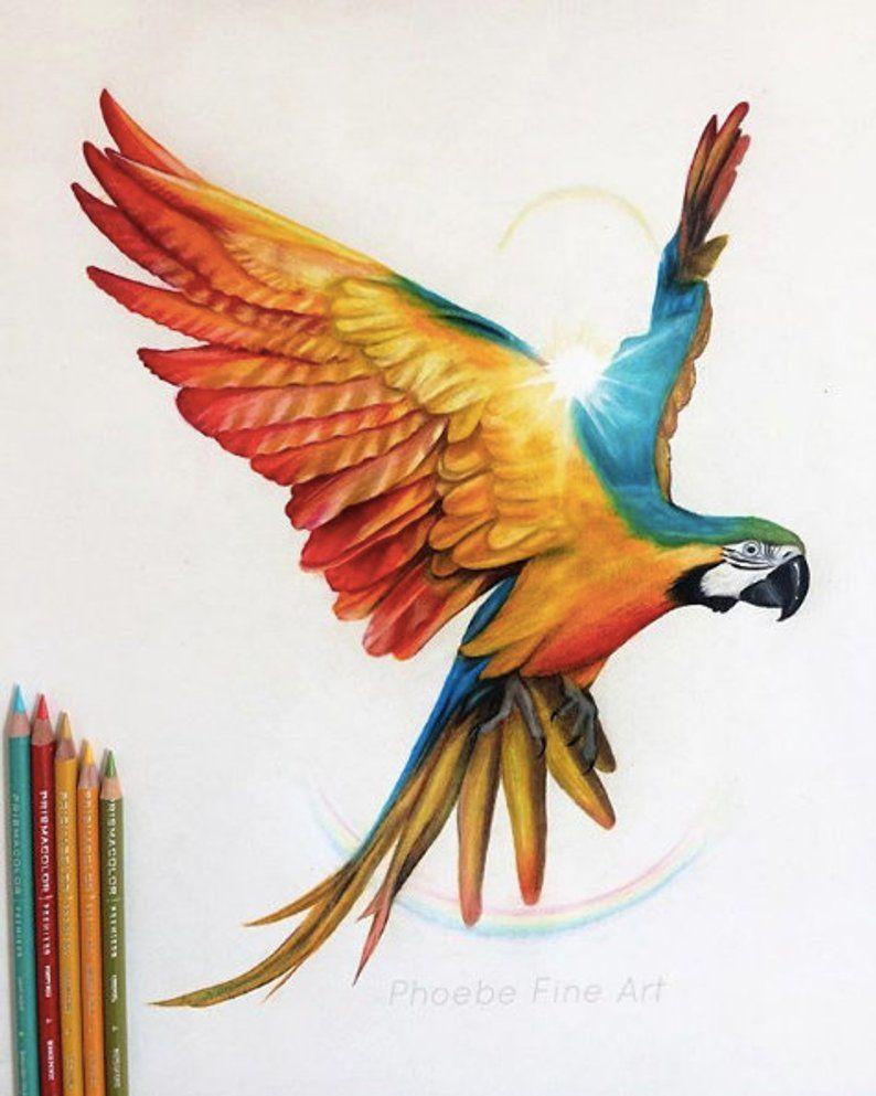 Papuga Rusunek Szukaj W Google Arte De Aves Dibujos De Guacamayas Dibujos De Aves