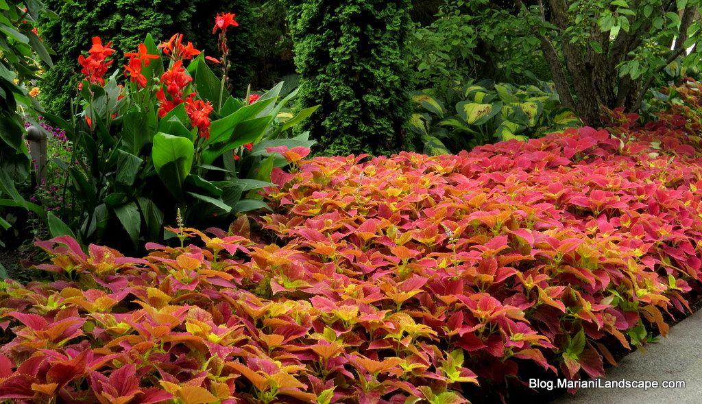 Sun Garden Gartenmobel ~ Garten picture of simena sun club camyuva tripadvisor
