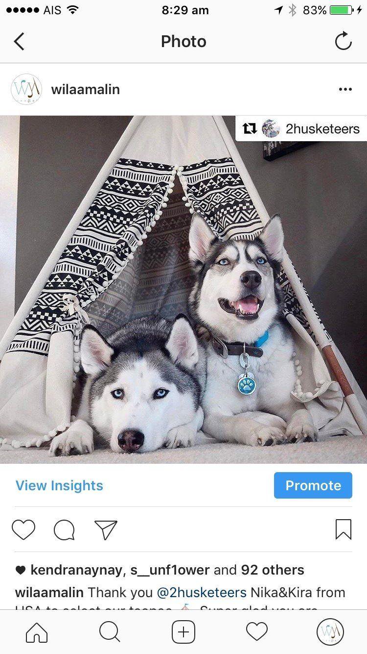 Pet Bed Teepee Tent Gemina Design