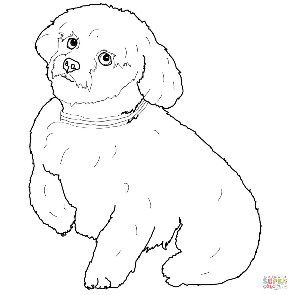 Short Hair Maltese Dog Super Coloring Animal Coloring Books