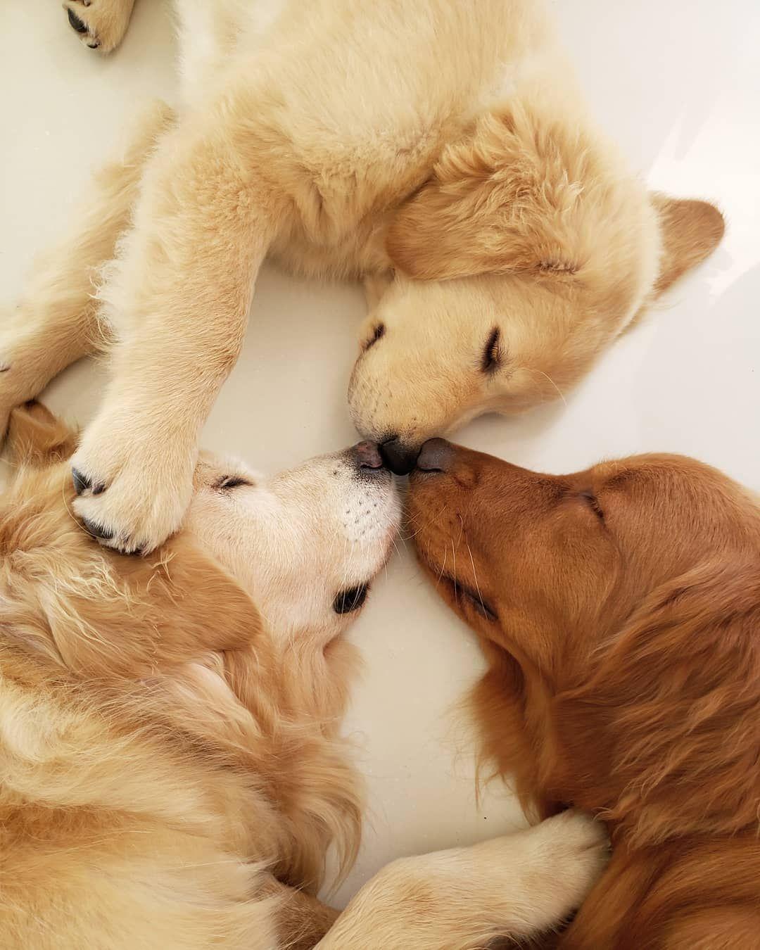 Cute Animals No.1