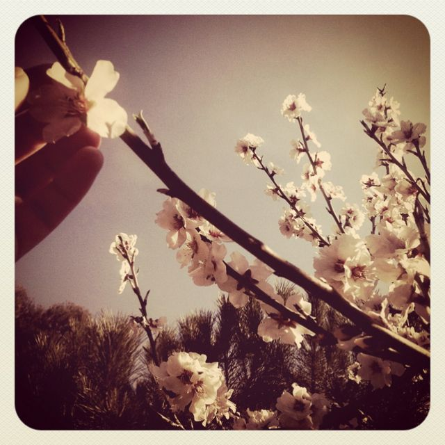 Flower. Photo by Jennifer Simionato.