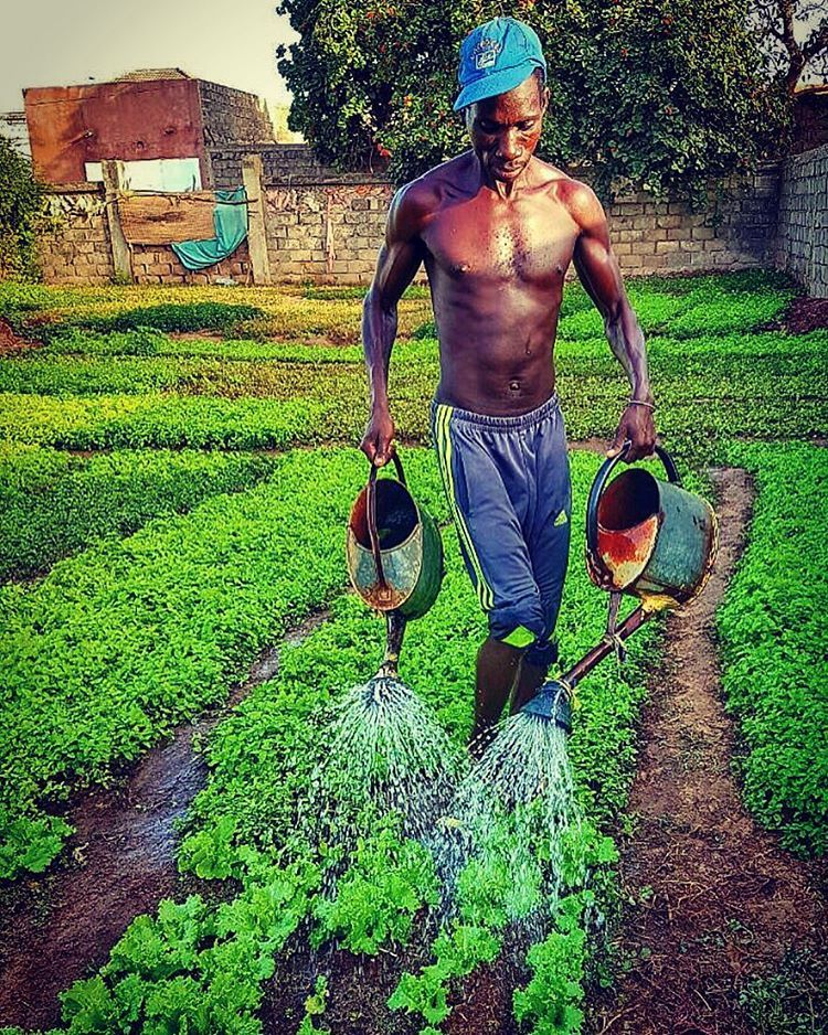 Farmer at work #senegal