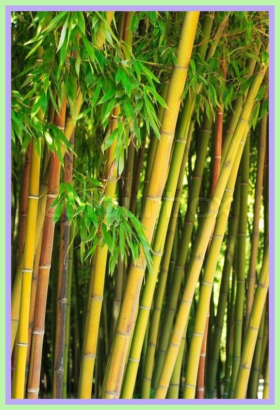 75 reference of Bamboo Fabric bamboo stalks