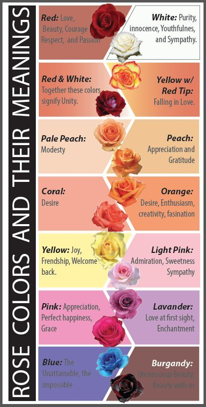 Brittonyas Floral Design Rose Color Meanings Color Meanings Different Types Of Flowers