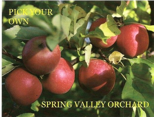 .Orchards and Farmer's Markets