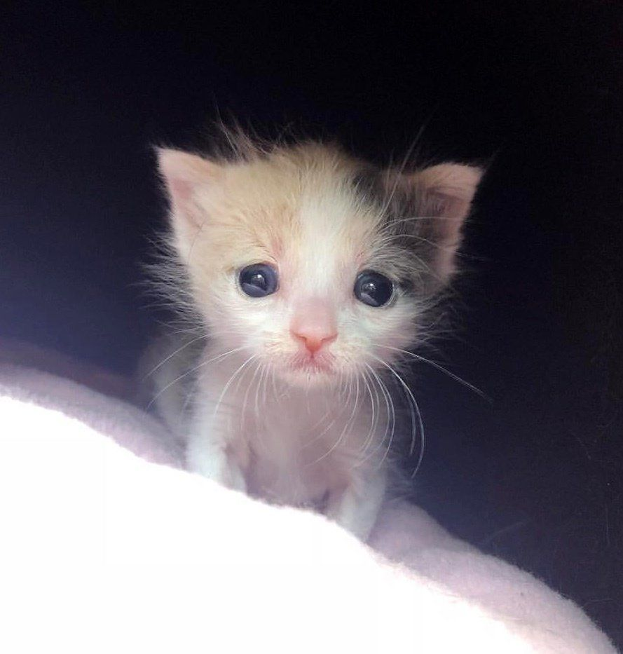 Orphaned Kitten Found Alone On Street Clings To Her Foster Mom When She Takes Her In Love Meow Baby Cats Kittens Cutest Cute Cats