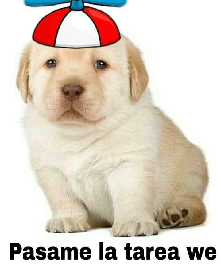 Pin De Yahaira Robledo En Perro Quiero Uno Memes Divertidos Memes Lindos Memes De Perros Chistosos