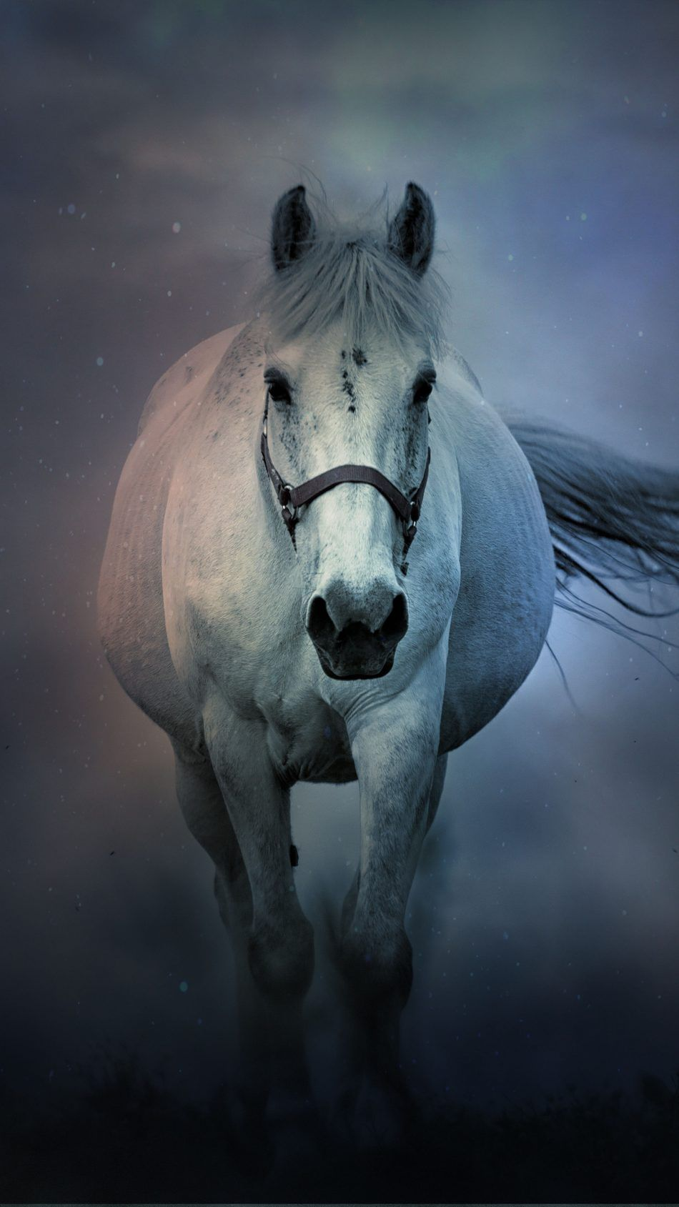 White Horse Running 4k Ultra Hd Mobile Wallpaper Horse Wallpaper Horses Animals