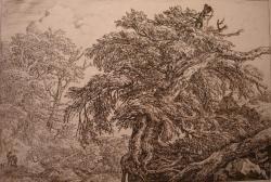 Jacob VAN Ruisdaël : arbre penché