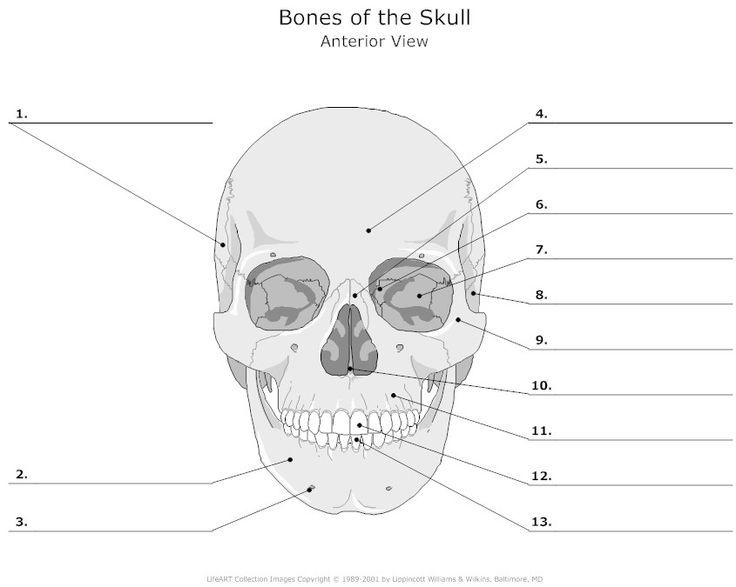Cranial Bones Diagram Unlabeled Electrical Work Wiring Diagram