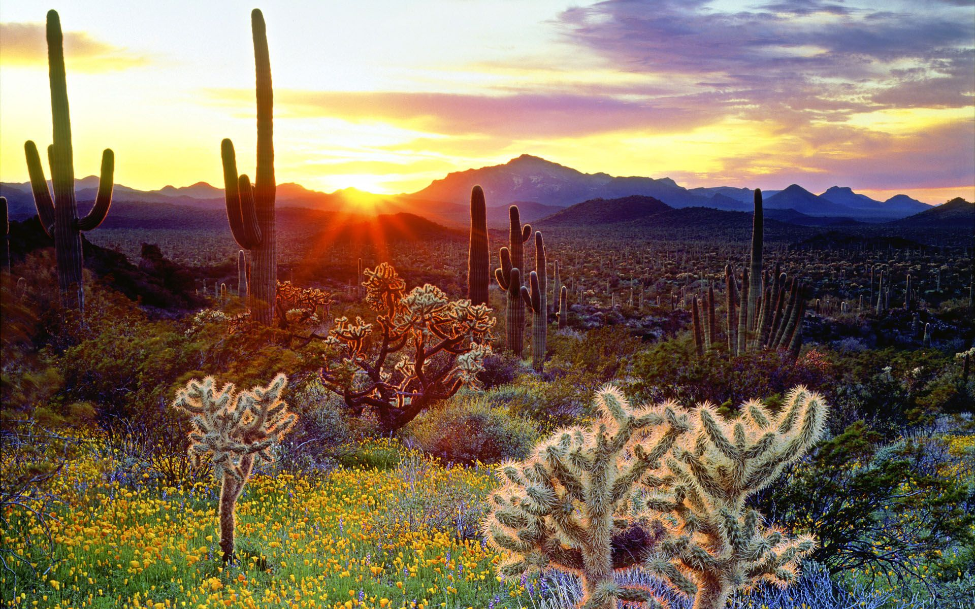 Hd Desktop Wallpapers Widescreen Catus In The Sunset Cacti