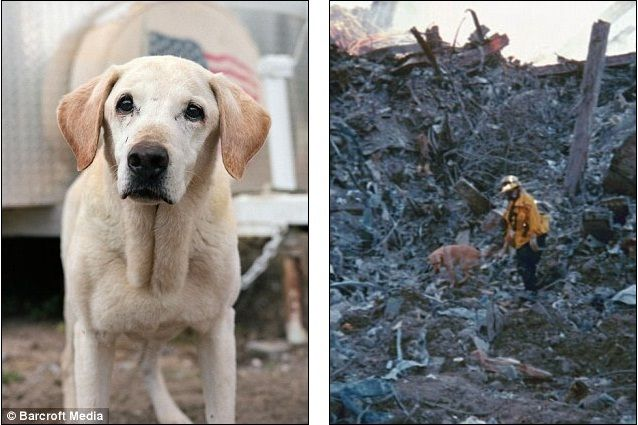 Image Detail For We Will Always Remember Rescue Dogs Of 9 11