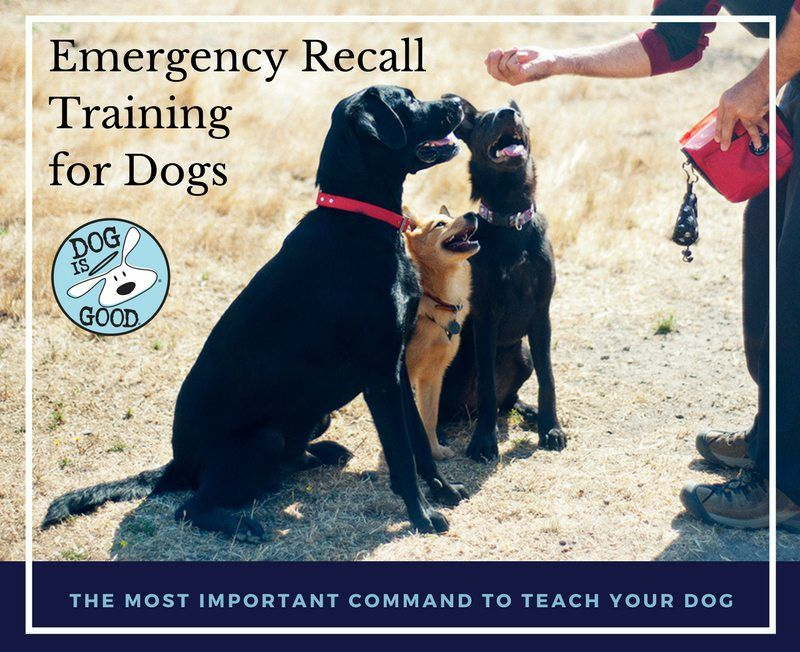 Emergency Recall Training in 4 Easy Steps (With images