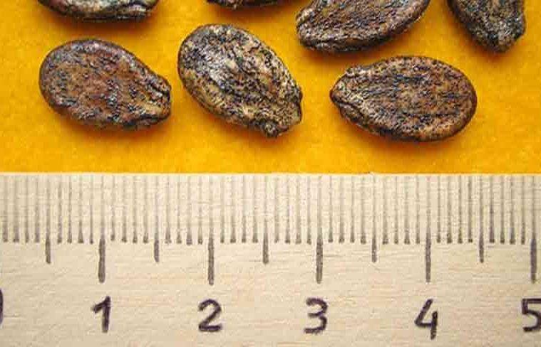 de ce sa consumam seminte de lubenita