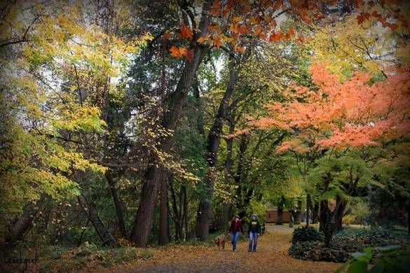 November Campus Chico State The Great Outdoors Chico