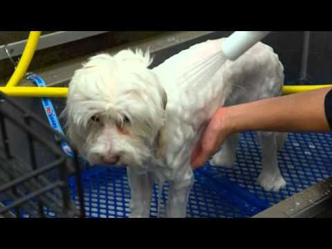 Behind The Scenes With Petsmart Dog Grooming Services Dog Grooming Petsmart Dog Dog Groomers