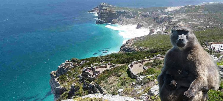Viajes Sudáfrica Cabo de Buena Esperanza