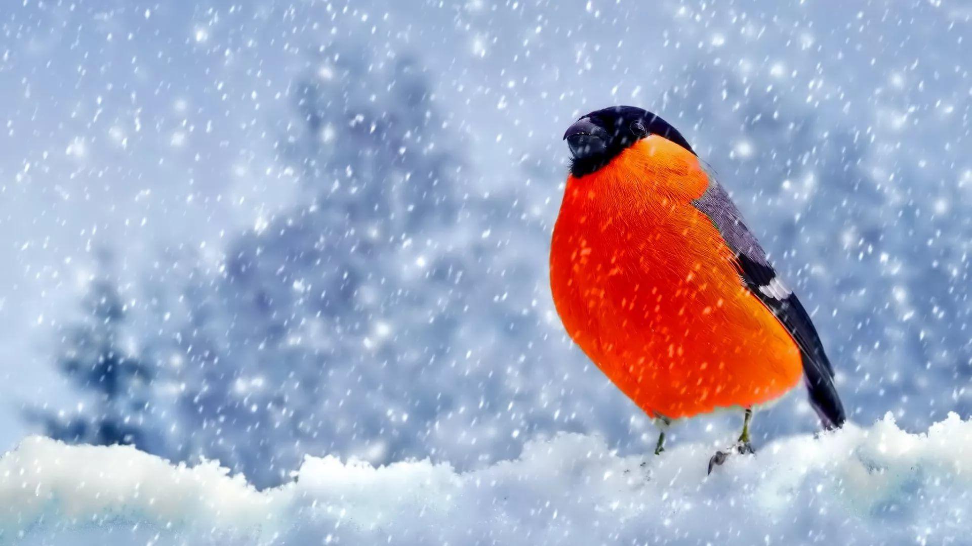 заставка на экран компьютера зима: 13 тыс изображений ...