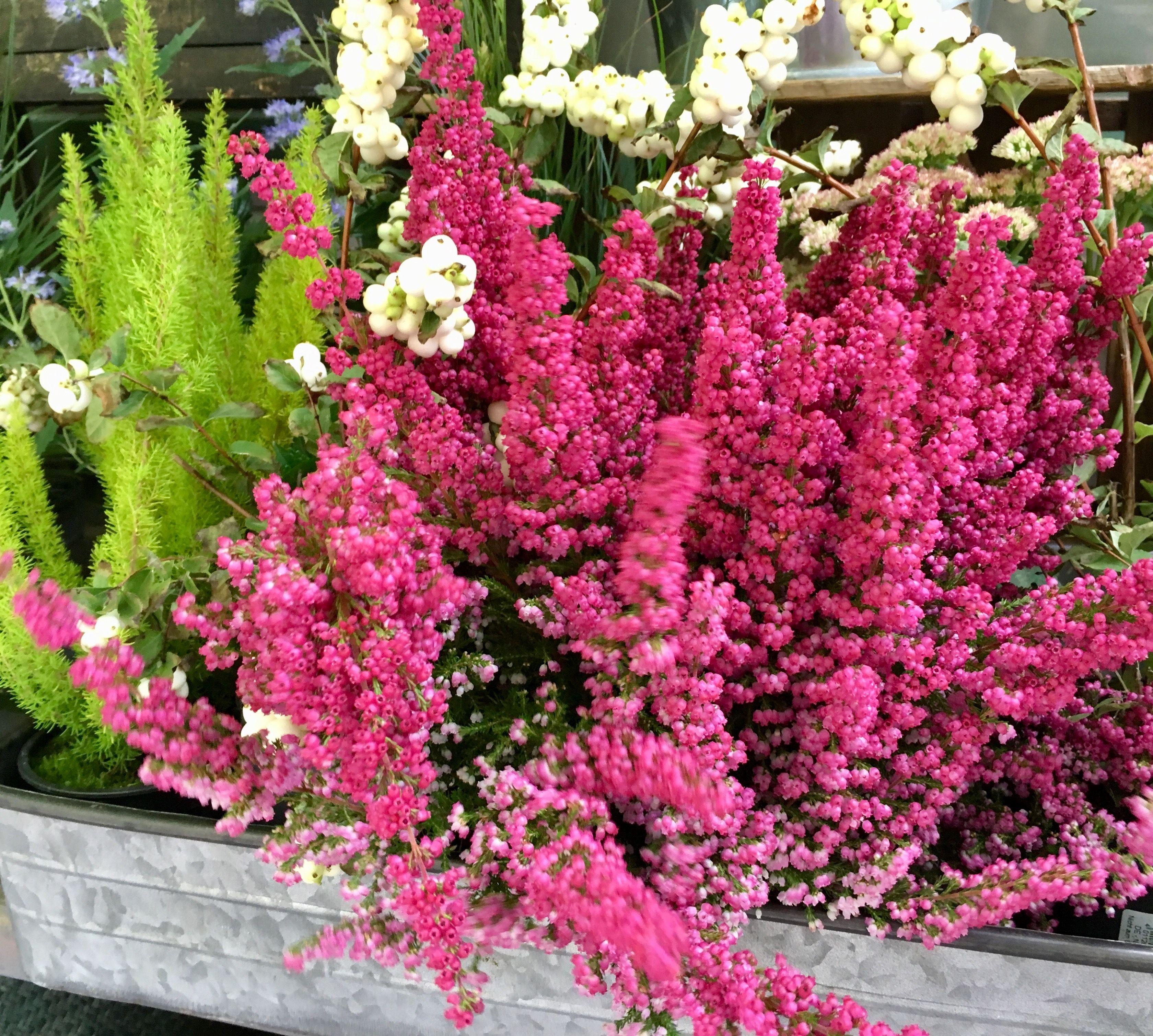 Landhausstil Garten Brunnen Gartendeko Gartentische Im Shop Kaufen Bepflanzung Pflanzen Herbstbepflanzung
