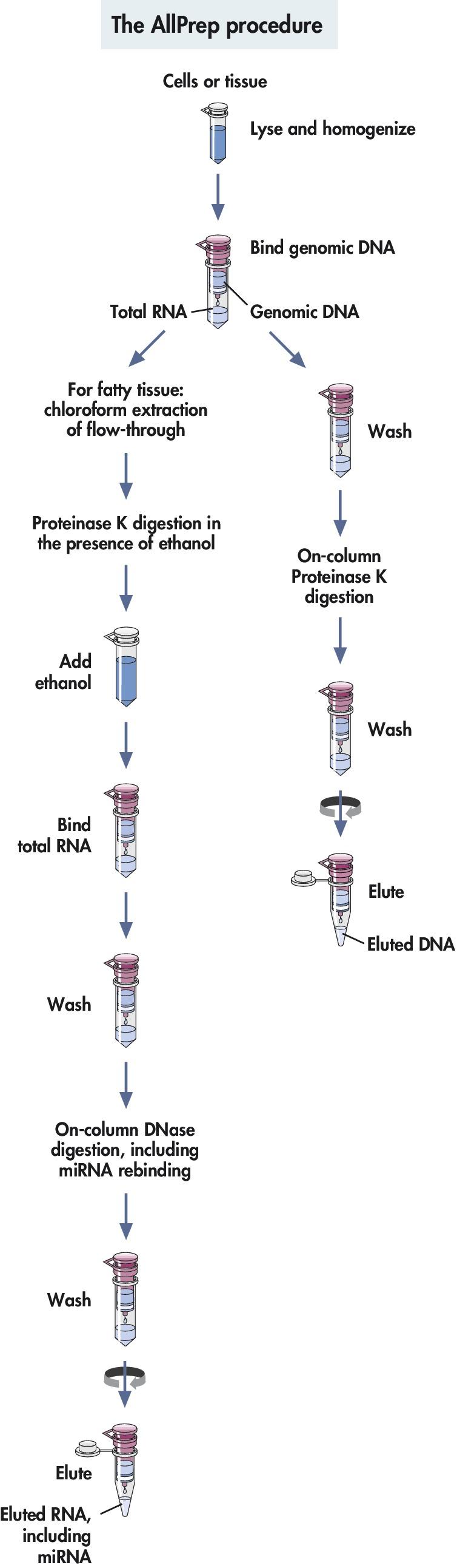 AllPrep DNA/RNA/miRNA Universal Kit from QIAGEN. In just ...