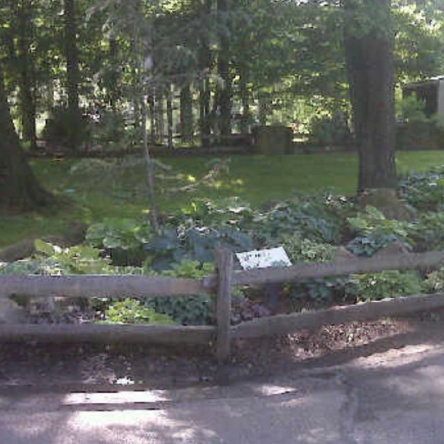 Hosta garden at the Cleveland Zoo (With images)   Hosta ...