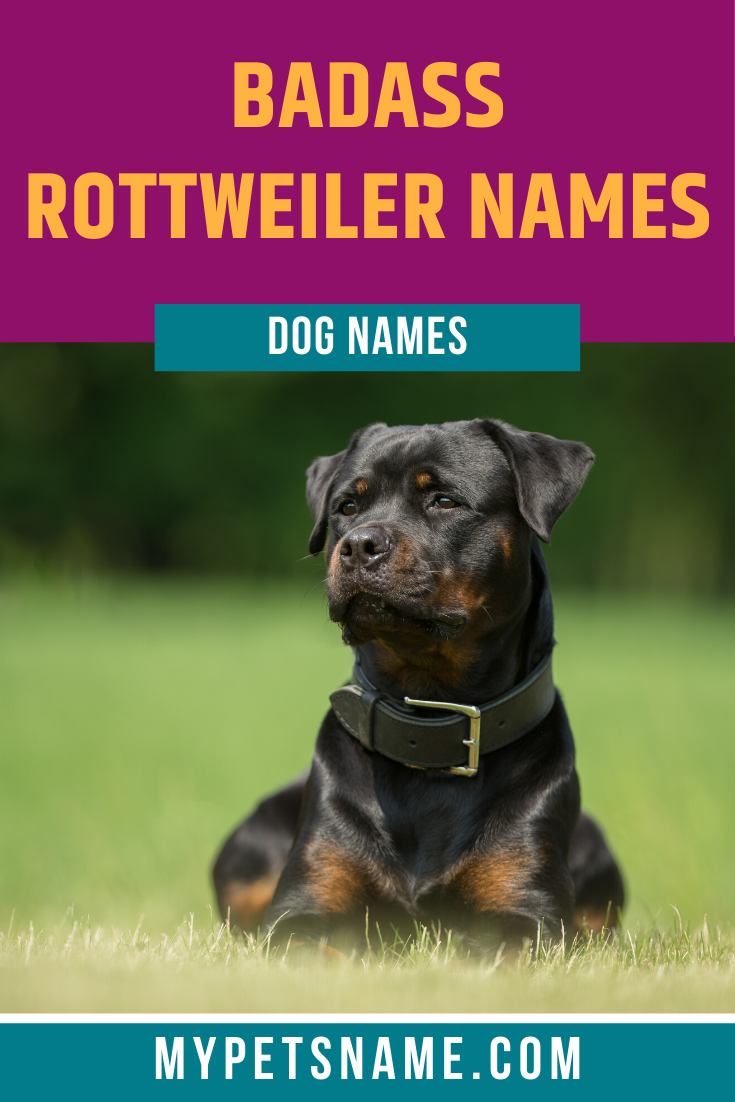 Badass Rottweiler Names In 2020 Rottweiler Names Pet Names For Dogs Rottweiler