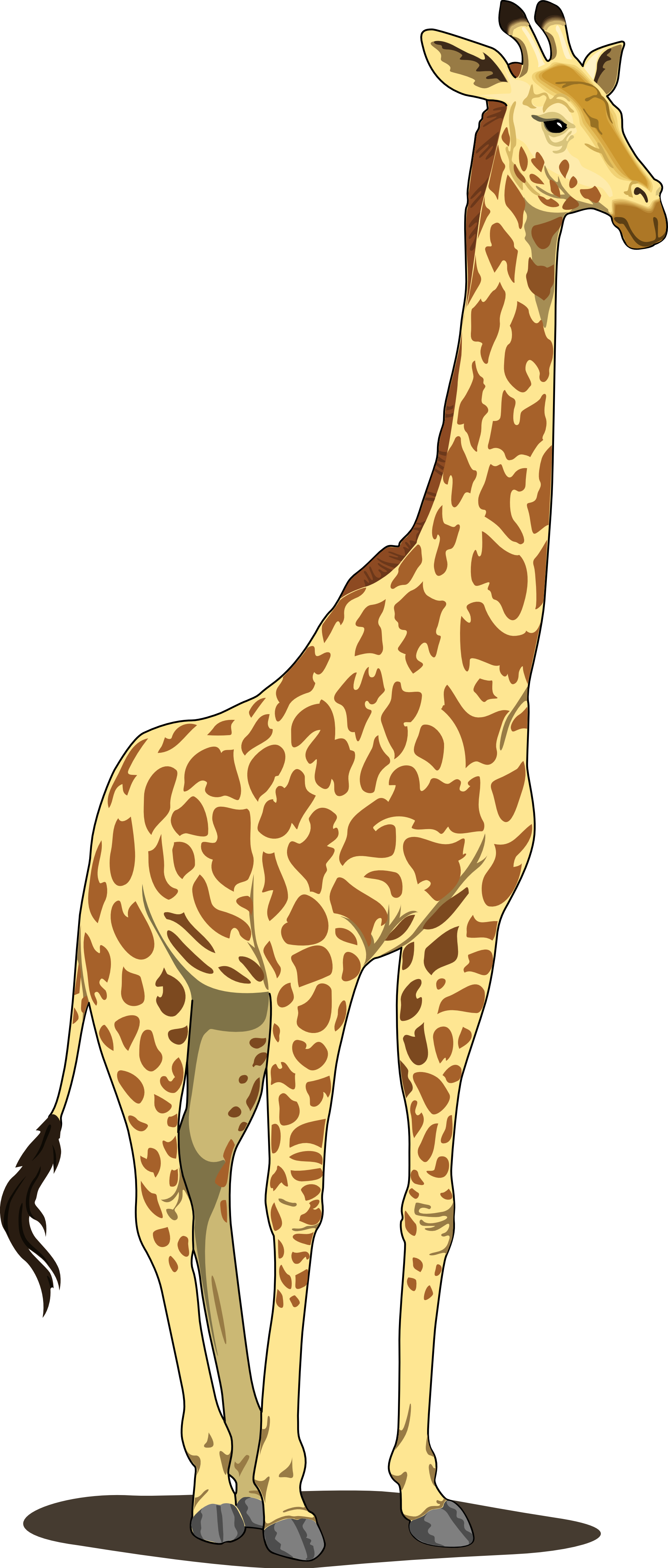 giraffe clipart widescreen 2 hd wallpapers [ 1969 x 4622 Pixel ]