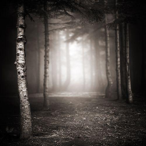 Ebru Sidar - Dark Forest