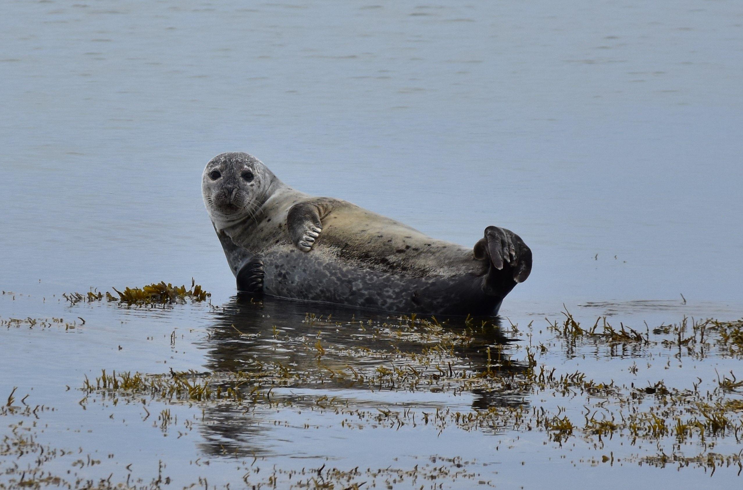 Una foca saludándonos desde la playa