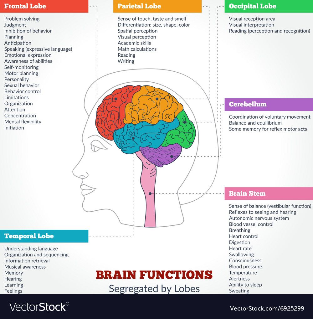 The Human Brain Its Parts And Functions Manual Guide