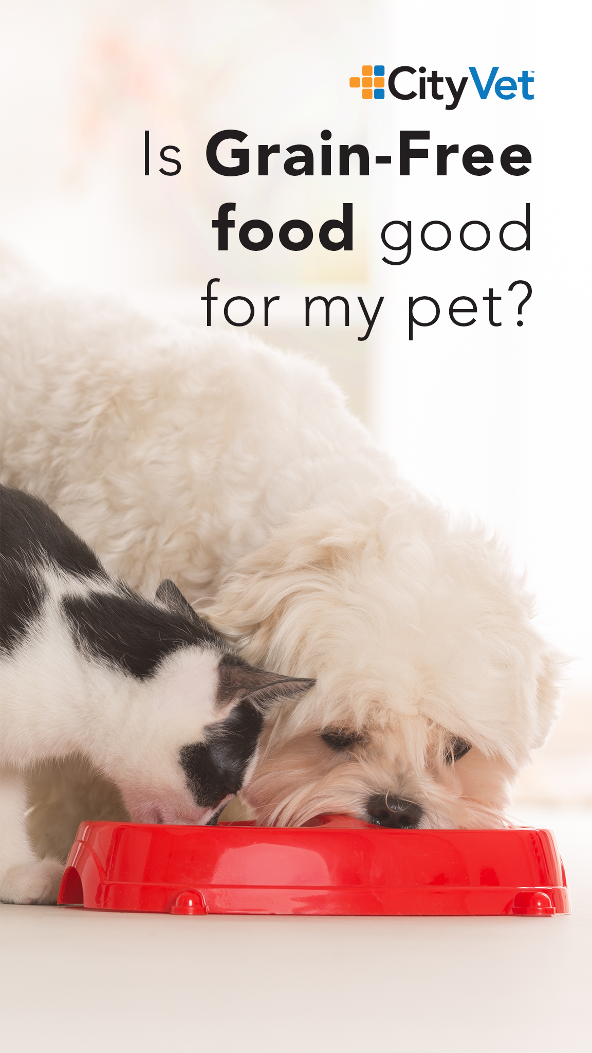 Read Our Latest Blog Post About The Recent Fda Release Regarding Grain Free Food Your Pet S Health Grain Free Grains Food