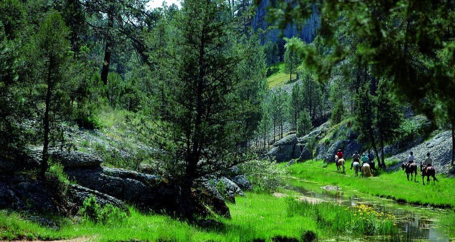 ¿Por qué no hacer el Camino a lomos de un caballo? http://buff.ly/1xfsHpE @RevistaARGI #spain #visitspain