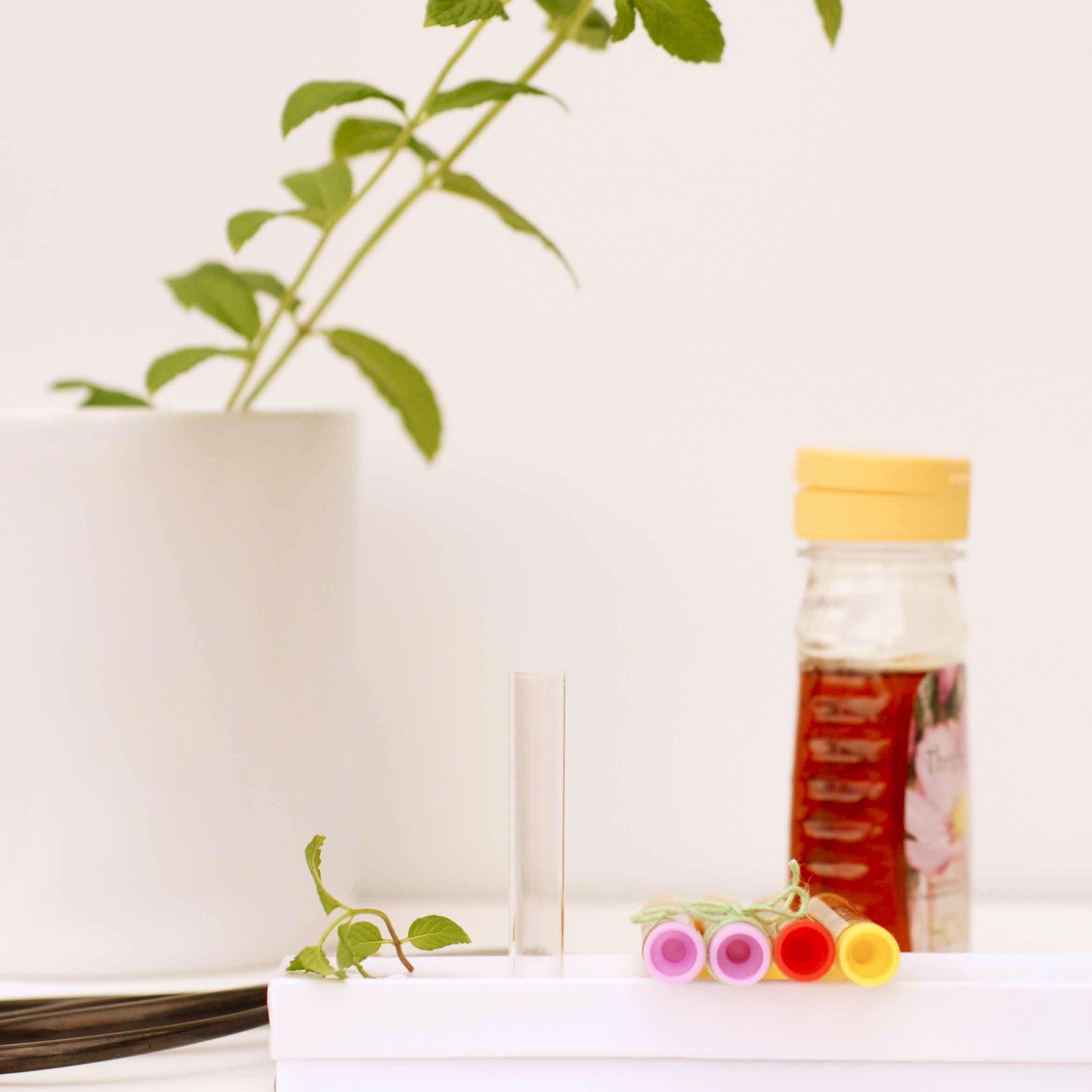 A Greenhouse Wedding | Honey favors, Honey and Favors