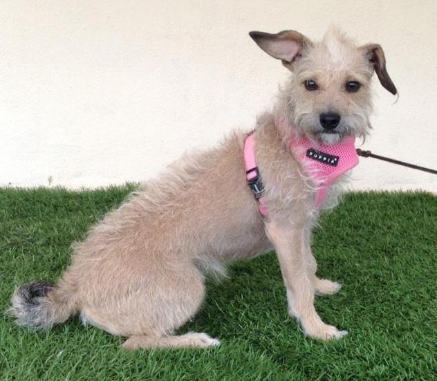 Adopt Maddy On Petfinder Animal Sanctuary Animal Rescue Animal Shelter