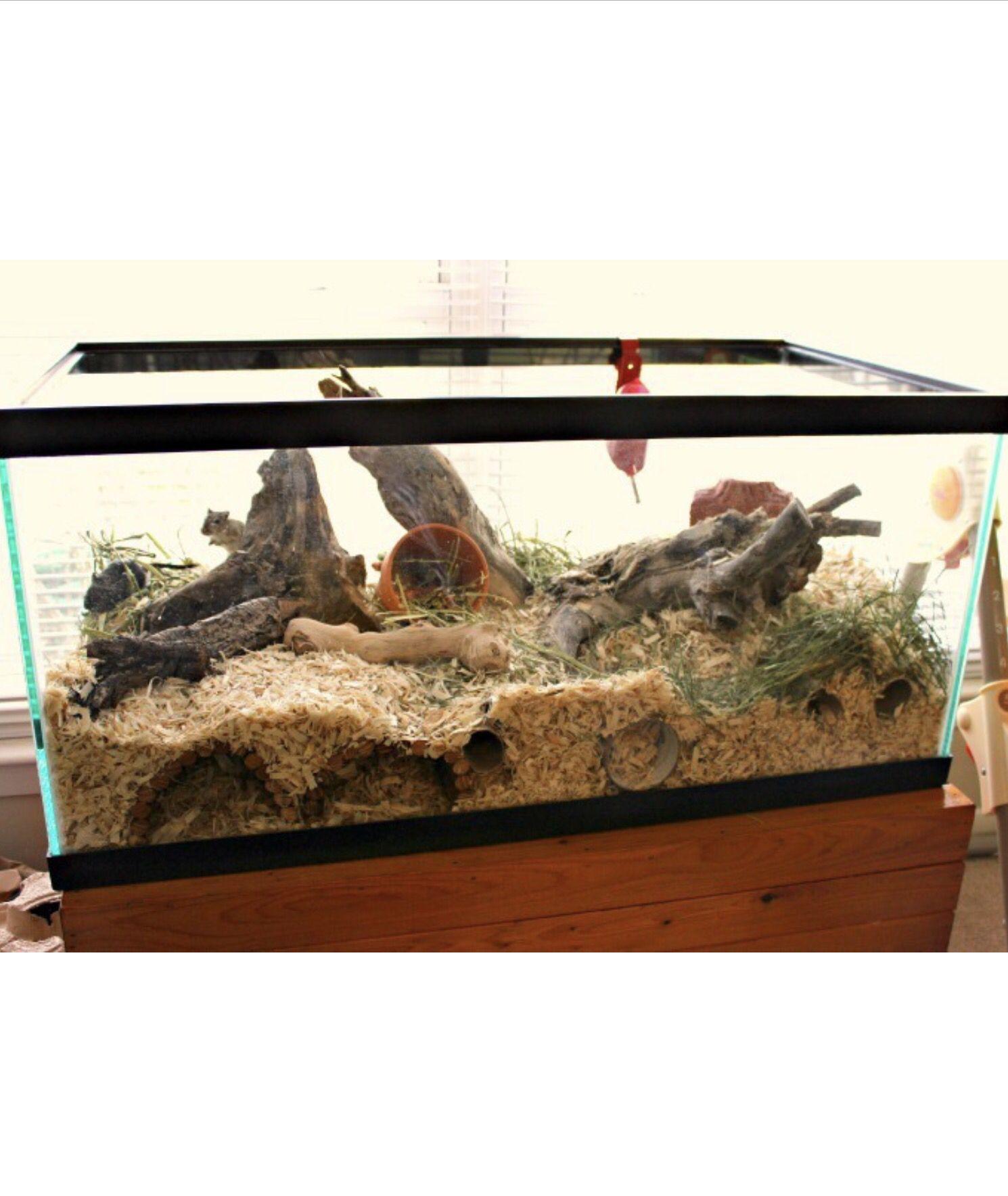 Large Gerbil Cage Tank Aquarium Zwerghamster Spielzeug Rennmaus