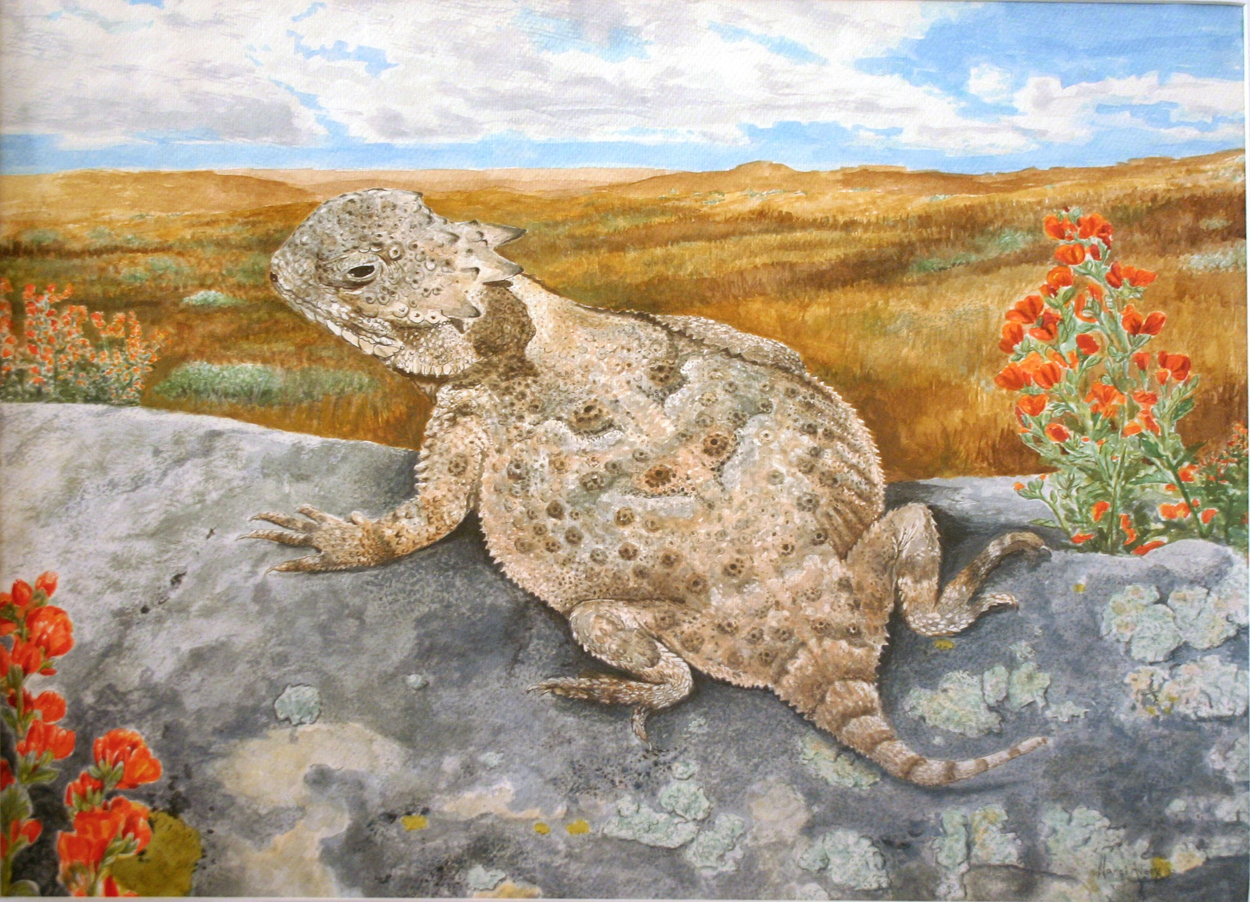 Horned Toad For A Wyoming Conservation Stamp Didnt Win But Sure Was Fun