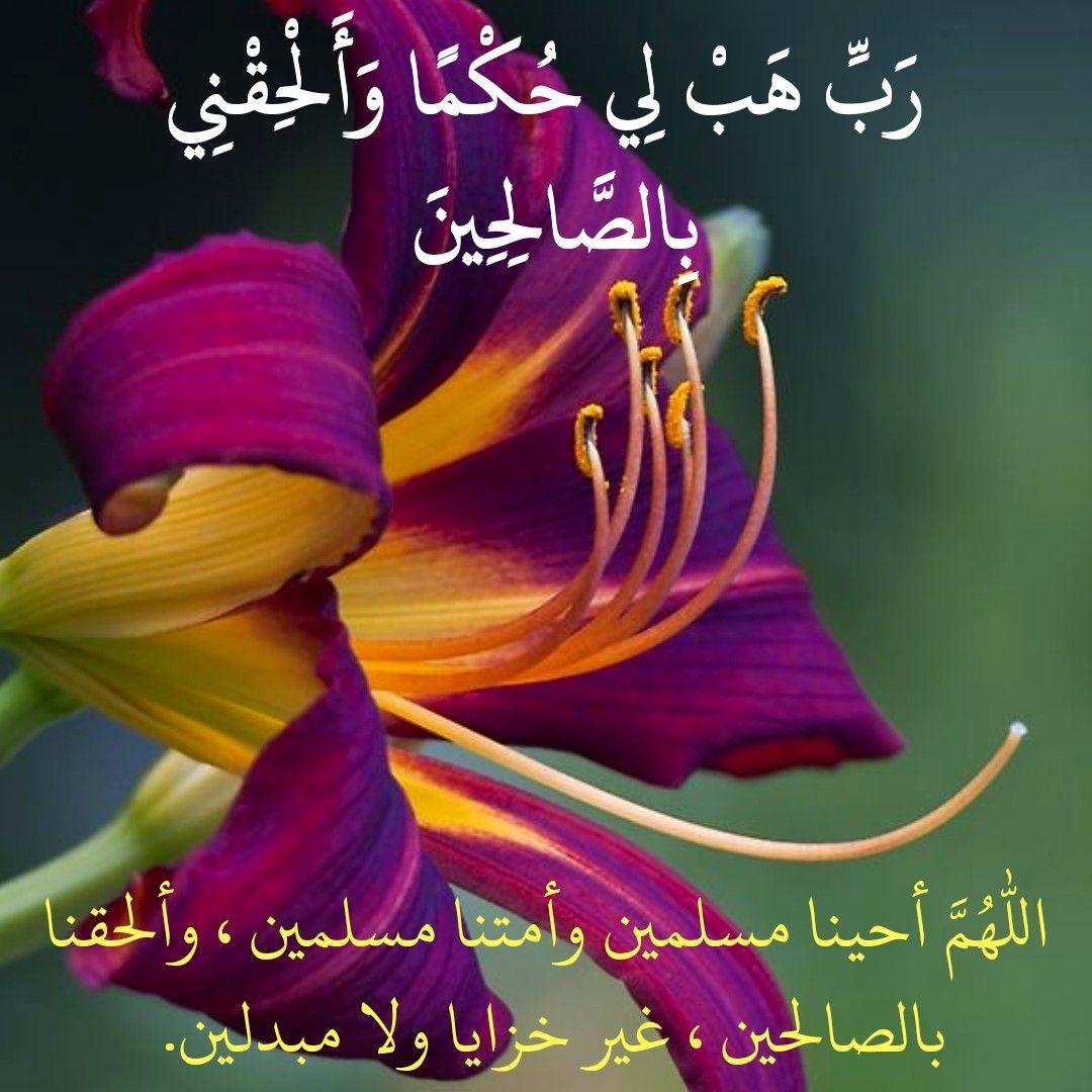قرآن كريم آية رب هب لي حكما وألحقني بالصالحين