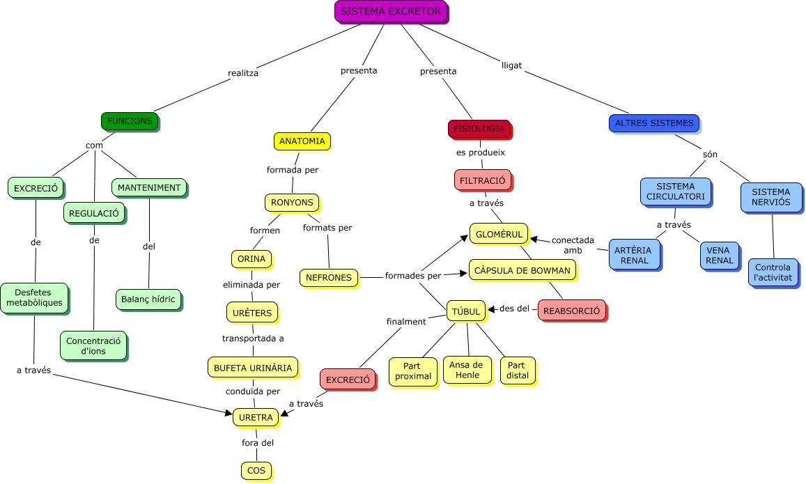 sistema excretor - Buscar con Google | Solo medicina | Pinterest ...