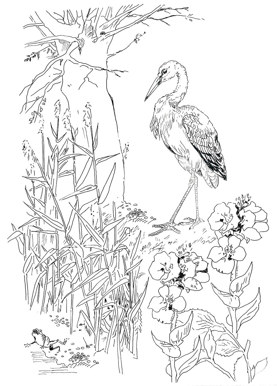 Pippa Rossi Lost Garden Stork And Frog Jpg 942 1313 Frog Coloring Pages Art Lessons Art Instructions